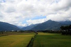 Campos do arroz em Taiwan imagem de stock royalty free
