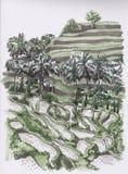 Campos do arroz esboço ilustração stock