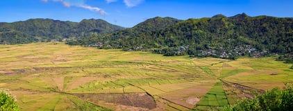 Campos do arroz na forma da Web de aranha imagens de stock royalty free