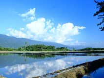 Campos do arroz na regência de SIGI, Indonésia imagem de stock royalty free
