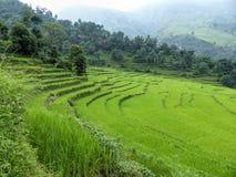 Campos do arroz, Nepal Fotografia de Stock