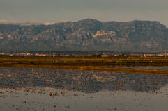 Campos do arroz no delta de Ebro fotos de stock