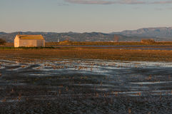 Campos do arroz no delta de Ebro imagens de stock