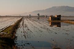Campos do arroz no delta de Ebro fotos de stock royalty free