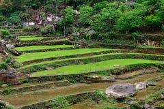 Campos do arroz no Pa do Sa Foto de Stock