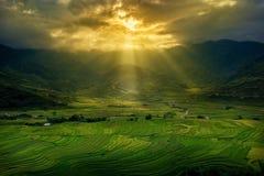 Campos do arroz no terraço Imagem de Stock