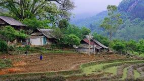 Campos do arroz no vale de Sapa fotos de stock