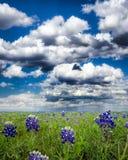 Campos do Bluebonnet em Texas imagem de stock royalty free