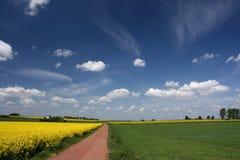 Campos do céu azul e do canola. Imagem de Stock