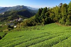 Campos do chá de Ásia fotografia de stock royalty free