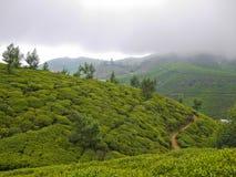 Campos do chá perto de Nuwara Eliya, Sri Lanka imagem de stock royalty free