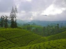 Campos do chá perto de Nuwara Eliya, Sri Lanka imagem de stock