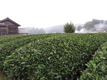 Campos do chá verde de Uji, Japão fotos de stock