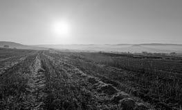 Campos do inverno fotos de stock