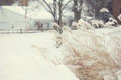 Campos do inverno da neve foto de stock royalty free