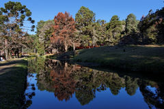Campos do Jordao. The woods with red autumn leaves pine trees reflected on the waters of a tranquil lake in Campos do Jordao, Sao Paulo, Brazil Royalty Free Stock Photo