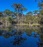 Campos do Jordao Lake Sao Paulo Brazil Royalty Free Stock Photo