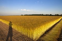 Campos do linho em Normandy, França Imagens de Stock Royalty Free