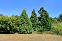 Campos do nd de Treesa em Kent norte imagens de stock