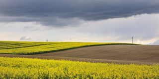 Campos do Rapeseed Fotografia de Stock Royalty Free