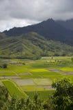 Campos do Taro no vale de Hanalei, Kauai, Havaí imagens de stock