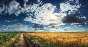 Campos do trigo e de milho antes da colheita Fotos de Stock Royalty Free