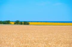 Campos do trigo e do girassol Fotografia de Stock Royalty Free