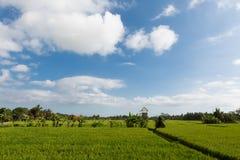 Campos do verde e do ouro, céus azuis Foto de Stock Royalty Free