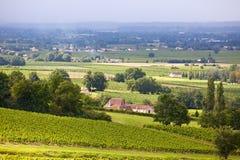 Campos do vinhedo em França do sul Imagem de Stock