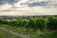 Campos do vinho em Estugarda Alemanha imagem de stock