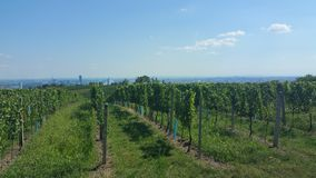 Campos do vinho em Viena Áustria foto de stock royalty free