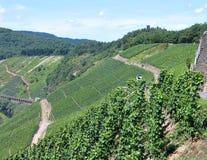 Campos dos vinhedos no Mosel Alemanha Imagens de Stock Royalty Free