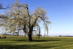 Campos e árvore Foto de Stock