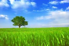 Campos e árvore verdes Imagens de Stock Royalty Free