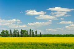 Campos e árvores na mola Fotografia de Stock