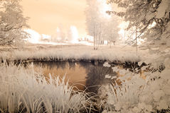 campos e florestas do campo Imagem infravermelha Fotos de Stock