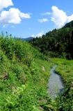 Campos e freshwate do arroz. Paisagem Himalayan Imagens de Stock