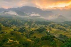 Campos e iluminación del arroz Fotos de archivo