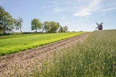Campos e moinho de vento verdes Fotografia de Stock Royalty Free