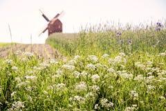 Campos e moinho de vento verdes Imagens de Stock Royalty Free