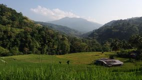 Campos e montanhas bonitos de almofada na bordadura Imagem de Stock