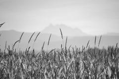 Campos e montanhas de trigo Fotos de Stock Royalty Free