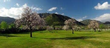 Campos e montanhas verdes florescidos das árvores Imagem de Stock Royalty Free