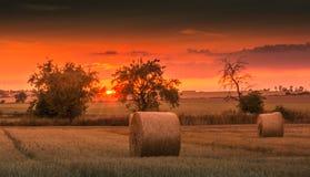 Campos e prados durante o por do sol Imagens de Stock Royalty Free