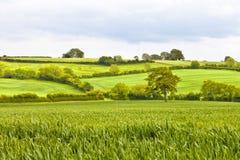 Campos e prados ingleses do campo fotografia de stock royalty free