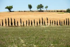 Campos e prados no vale abaixo de Sault, Provence imagens de stock royalty free