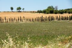 Campos e prados no vale abaixo de Sault, Provence fotografia de stock royalty free