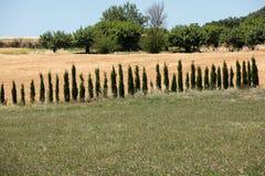 Campos e prados no vale abaixo de Sault, Provence foto de stock