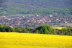 Campos e vila da semente oleaginosa Fotografia de Stock Royalty Free