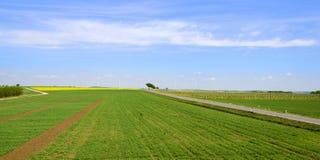 Campos e vinhedo com estrada e turbinas eólicas Foto de Stock